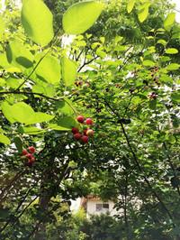 2016berry2