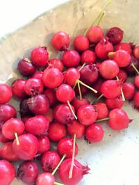 2016berry3