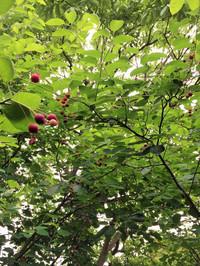 2016berry6